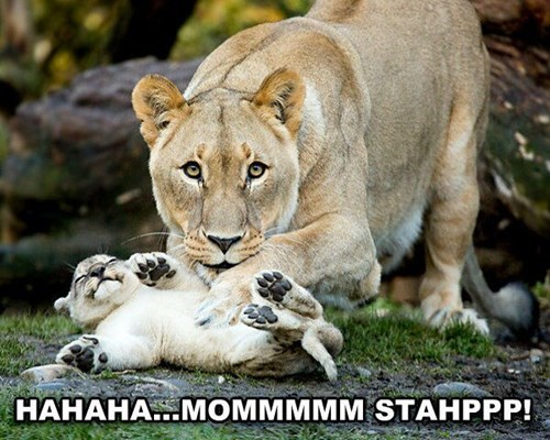 Babies cute lions tickle mama - 7989088768