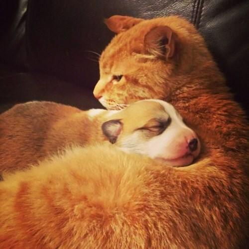 Cats cute snuggle puppies - 7989092096