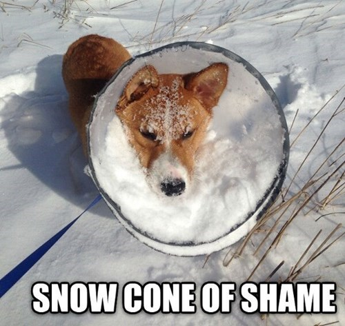 dogs cold cone of shame snow winter