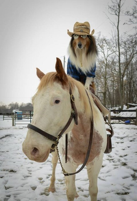 Cowboys,dogs,horses,puns