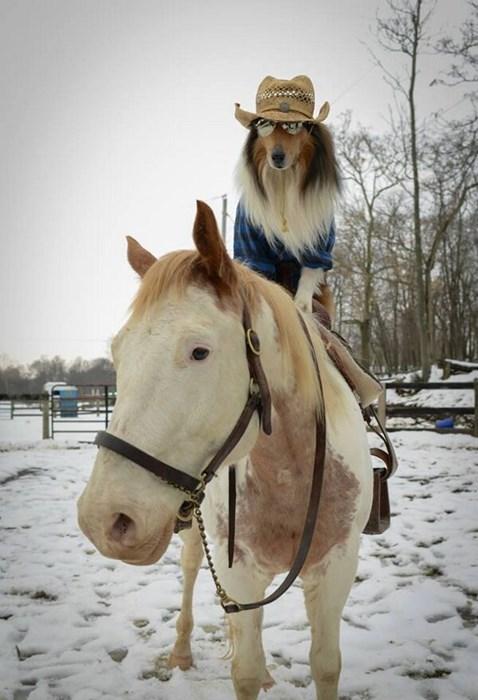 horses puns - 7989120512