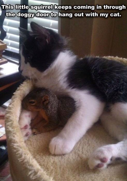 Cats cute furry squirrels soft - 7989145600