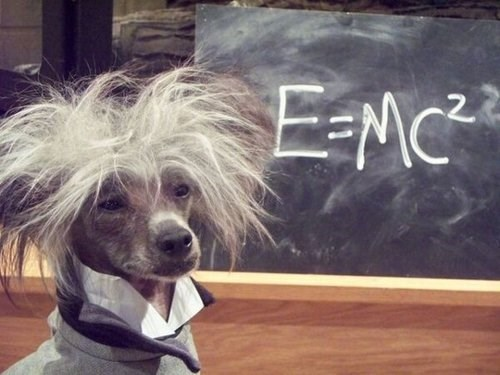 albert einstein physics funny science - 7990377984