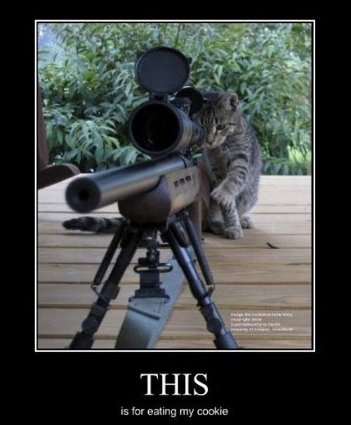 cat cookies animals funny sniper - 7990499584