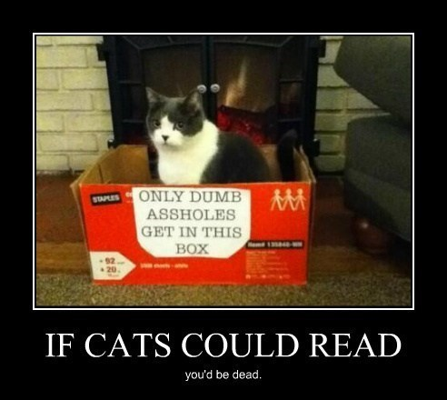 angry Cats funny reading - 7990551296