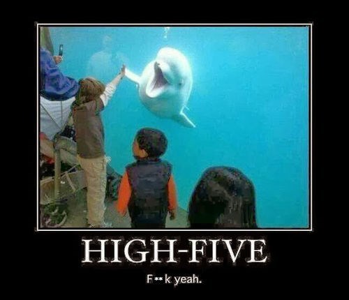 animals,high five,kids,funny,sea mammals