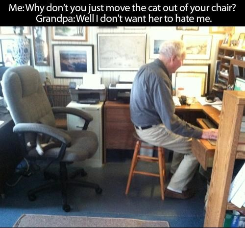 Cats boss computer hate Grandpa