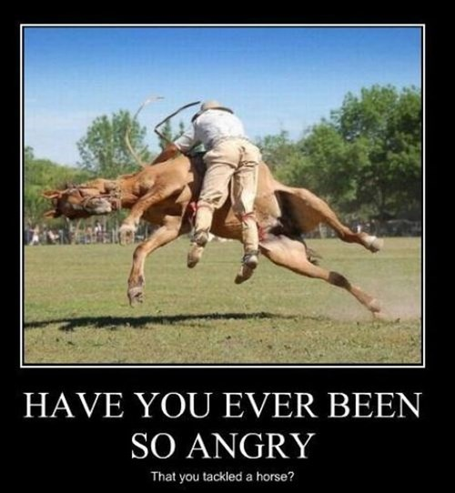 angry animals horse funny - 7990696192