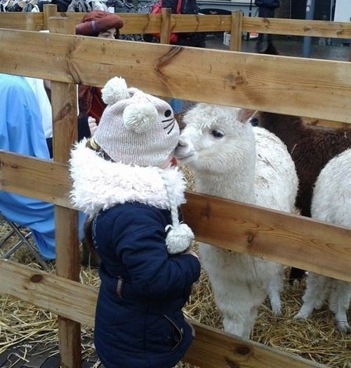 cute children llamas KISS spit