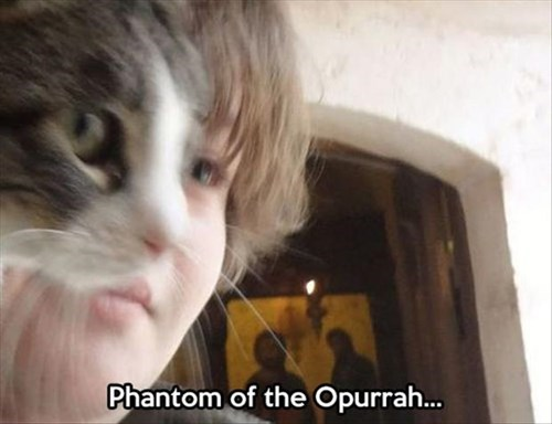 Cats broadway puns musicals phantom of the opera - 7990725376