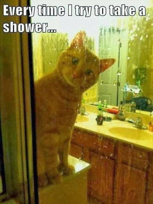 amazed Cats funny shower - 7990749184