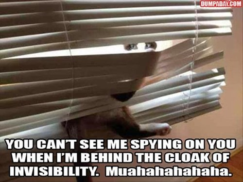 blinds Cats cloak of invisibility curtains funny - 7990760960