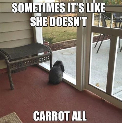 bunnies cute depressed rabbits - 7990764032