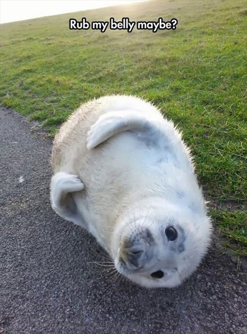 Babies cute seals rub my belly - 7990777344