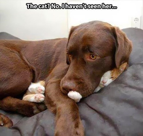Cats,dogs,funny,innocent,Pillow,guilty