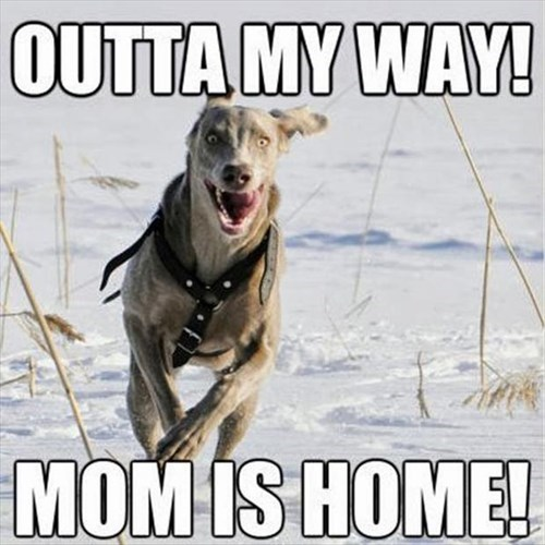 dogs home running moms - 7990845440