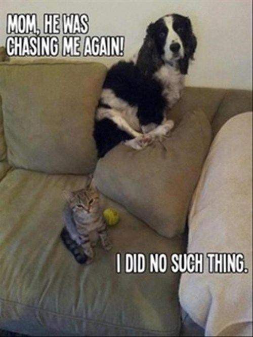 Cats,cute,dogs,chasing,funny,scared
