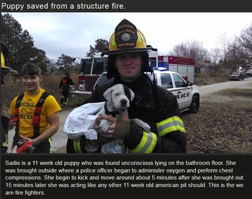 firefighter dogs random act of kindness restoring faith in humanity week