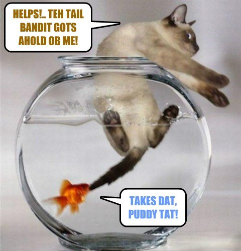 fish,Cats,funny