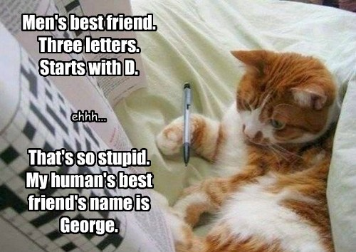 Men's best friend. Three letters. Starts with D. That's so stupid. My human's best friend's name is George. ehhh...