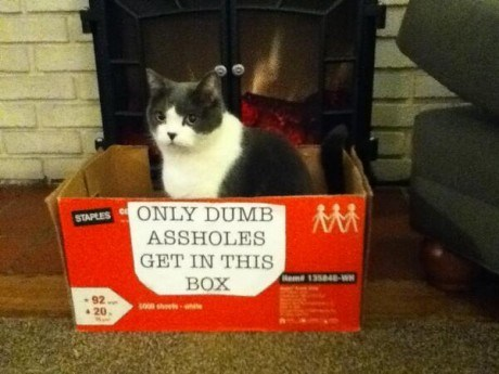 Cats boxes if it fits i sits - 7992317952
