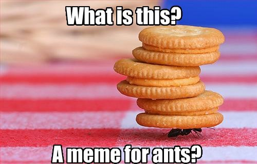 What is this? A meme for ants?