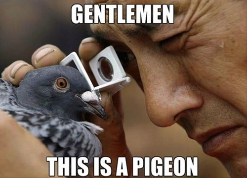 funny science obvious observation pigeons - 7992592384
