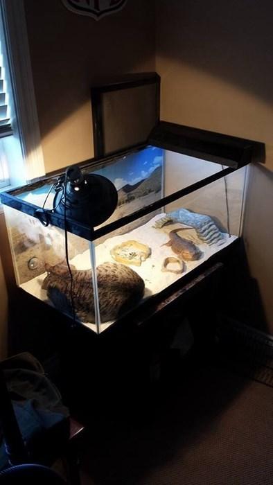 Cats funny lizards terrarium warm - 7992597248
