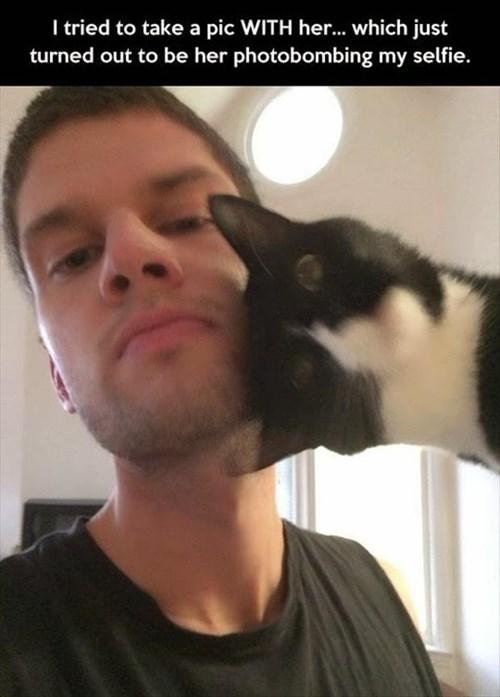 Cats funny photobomb selfie - 7992607488