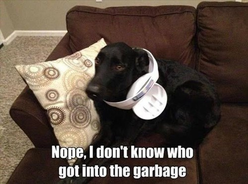 garbage dogs funny sneaky - 7992619264