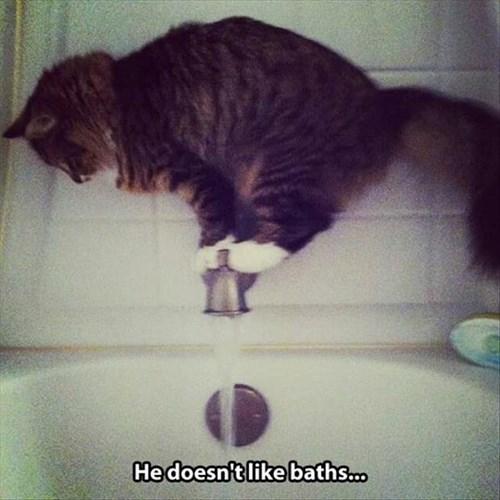 Cats bath funny stuck - 7992620544