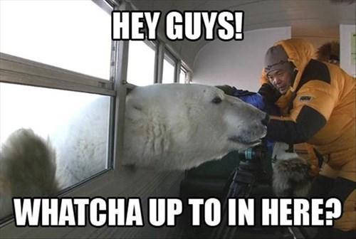 funny polar bears scary - 7992638208