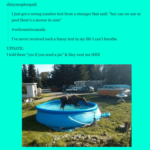 AutocoWrecks,Canada,moose,text,pools
