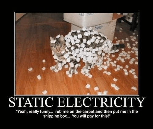 cat,funny,packing peanuts,static electricity