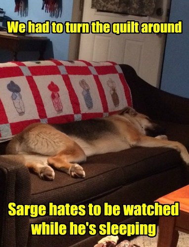 We had to turn the quilt around Sarge hates to be watched while he's sleeping