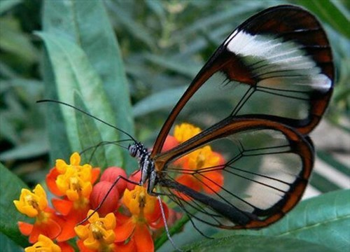 insects butterflies flowers beautiful