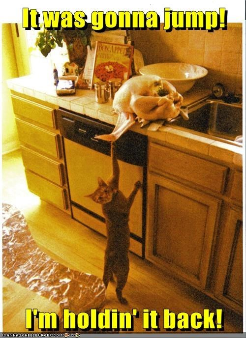 Cats caught funny guilty turkeys - 7994248448