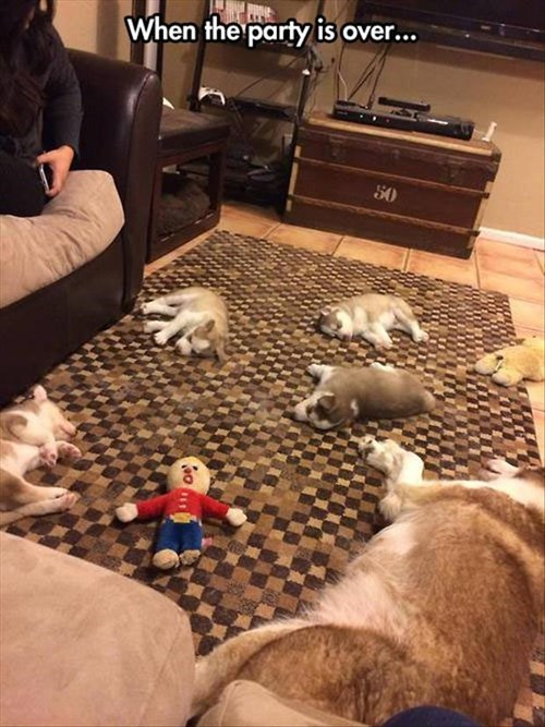 cute dogs Party play puppies sleep - 7994255616