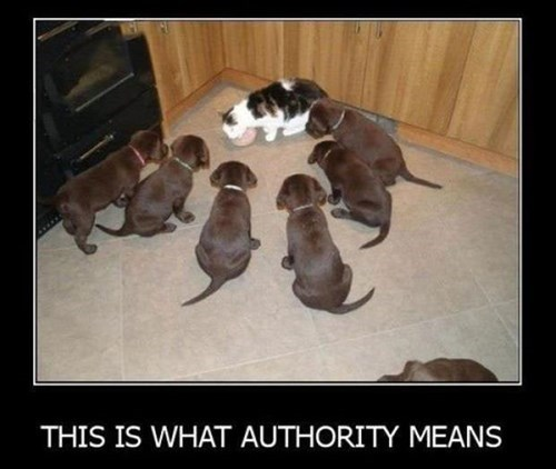 Cats,authority,dogs,funny,puppies,noms