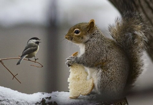 cute,birds,bread,snow,funny,squirrels,winter
