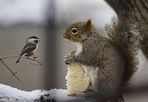 cute birds bread snow funny squirrels winter - 7994277888