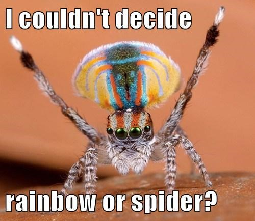 cute,decision,funny,rainbow,spider