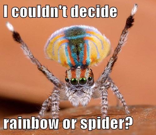 cute decision funny rainbow spider - 7994293248