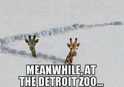 detroit zoo cold snow giraffes winter - 7994339840