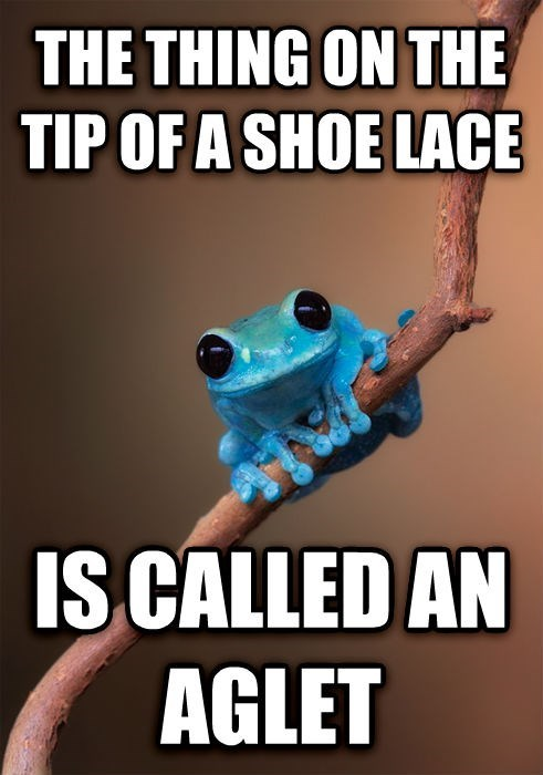 advice animals Memes tiny fact frog small fact frog - 7994345472