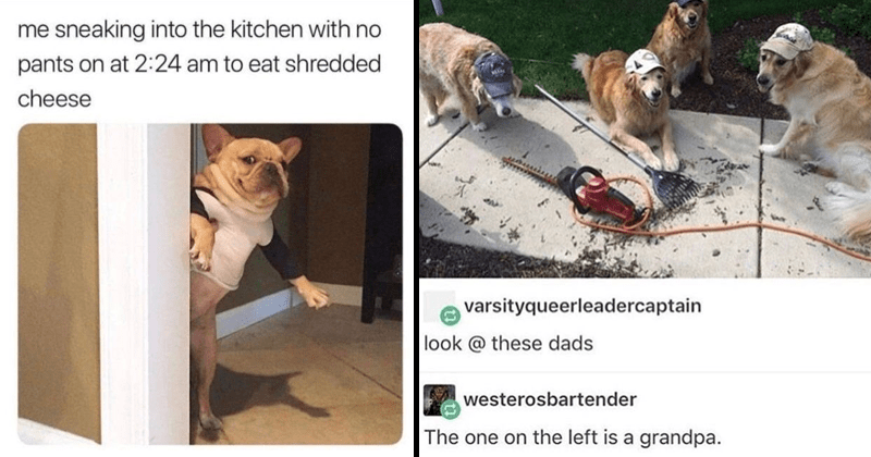 Funny anima, memes, dogs, cats.