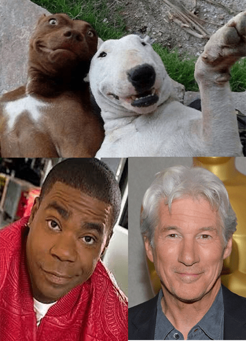 Tracy Morgan,dogs,richard gere,air bud