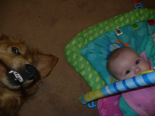 Babies dogs parenting - 7995478528