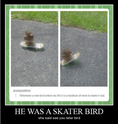 song avril lavigne bird funny - 7995550464