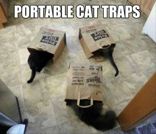 For When You Need to Trap Your Cat...